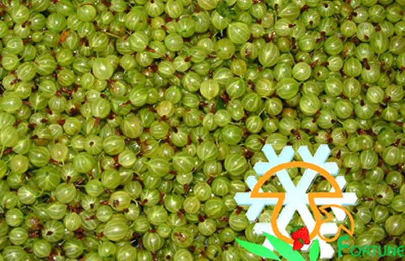 IQF Gooseberry
