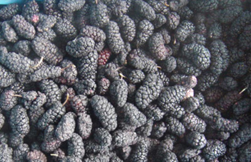 IQF Mulberry