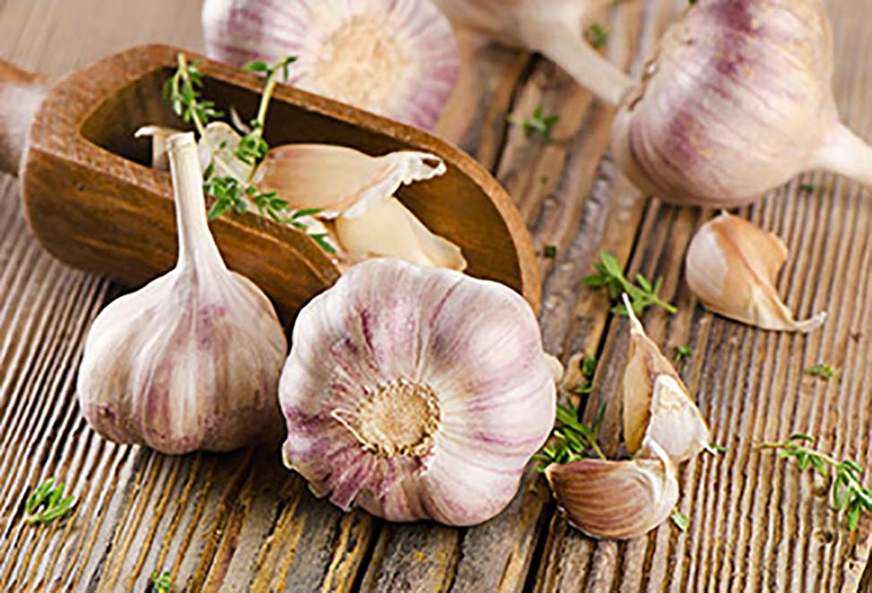 Chinese Garlic Price is Booming Again in Autumn 2019